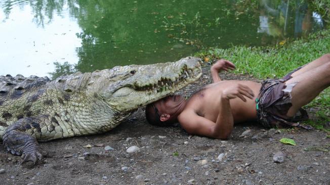 Increíble historia de amistad de un cocodrilo y su cuidador