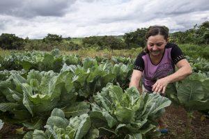 La incorporación de los pequeños productores a los mercados es una prioridad para el IICA.