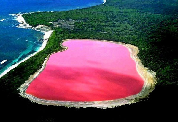 australiano rosado