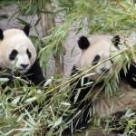 Especies icónicas son otra víctima del cambio climático