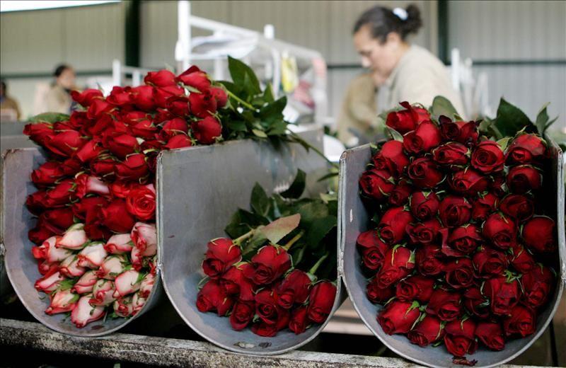 Cu nto gastar este domingo en san valent n for Cuarto lleno de rosas