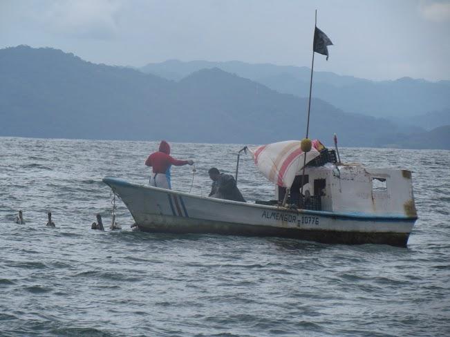 Sala iv conden a incopesca por no entregar informaci n for Todo sobre barcos