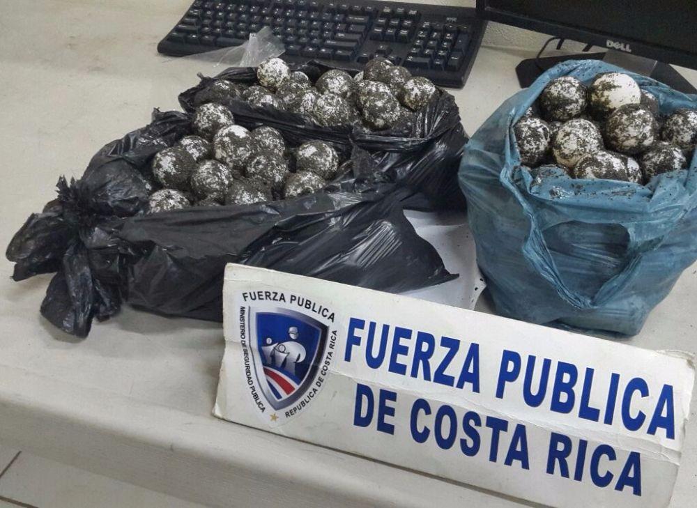 Recuperan 285 huevos de tortuga en Herradura