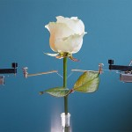 Rosa robótica podría ayudar a la generación de energía