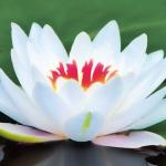 La frase del día proverbio hindú